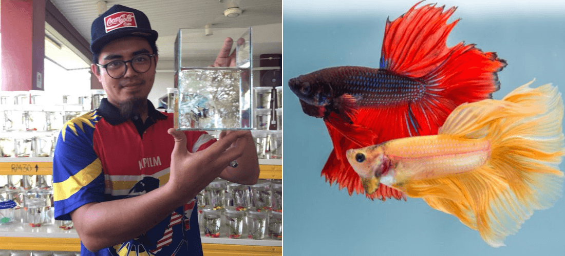 Mohd Fajiha Quits Engineering Career to Become Fish Breeder And Earns Five-Figure Salary